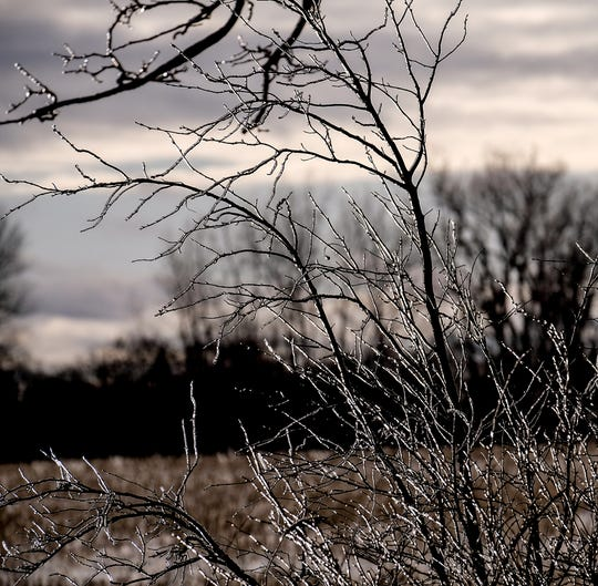 The sun breaks through the clouds lighting up the thin coating of ice covering some branches branches Sunday, Jan. 12, 2020.