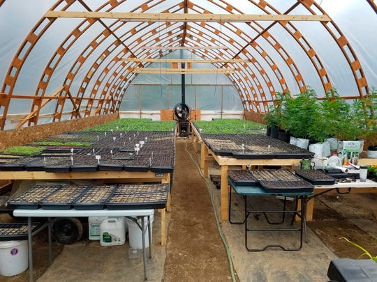 This May 13, 2019 photo provided by LoveGrown Agricultural Research LLC, shows a greenhouse nursery area for organic hemp seedling production in Farmington, Maine. Hemp farmers in Maine and around the country are grappling with new laws as the industry comes into compliance with new federal rules.