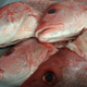 A Cape Coral fishing captain was sentenced on a guilty plea to charges he  pocketed $286,000 by not fully reporting all of his catch of red grouper and red snapper