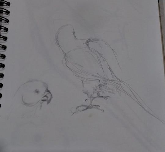 A sketch by Manitowoc artist Jody Kuchar.