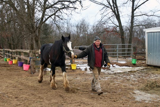 Lyle Peterson leads one of his horses, Molly, at Red Ridge Ranch outside Mauston on Jan. 9, 2020.