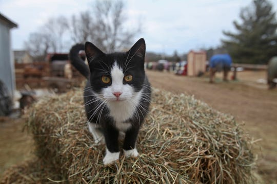 Cats can become infectedwith the coronavirus through airborne transmission, studies show.Dogs, however, have a very low susceptibility to the virus.
