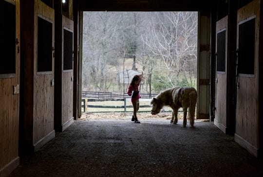 Aubrey Shaffer gives grain as a treat to one of her grandmother's rescued horses, Minny Whinny.