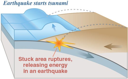 An earthquake along a subduction zone happens when the leading edge of the overriding plate breaks free and springs seaward, raising the seafloor and the water above it. This uplift starts a tsunami.