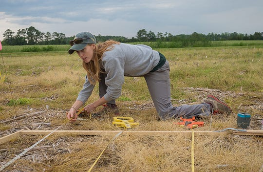 Kate Tully sets up a grid to properly space spartina plants in a field near Powellville on the Eastern Shore.