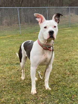 Babette was the first dog to attend the TLDC prison dog program, a partnership between the Richland County Dog Warden's office and Mansfield Correctional Institution.