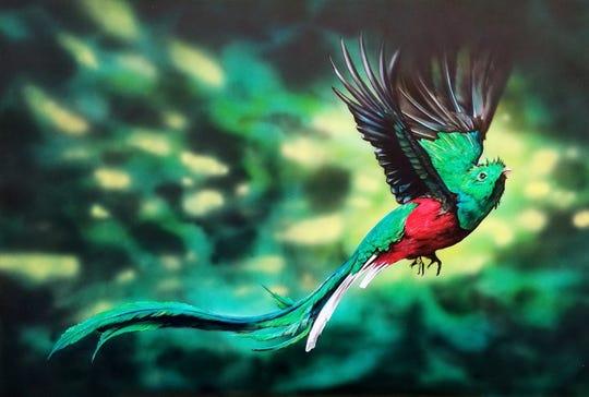 "Luis Navarro's ""Bird in Flight"""