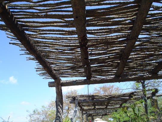 Dead ocotillos, or dead canes, are useful when recycled into ramada slats that discourage birds.