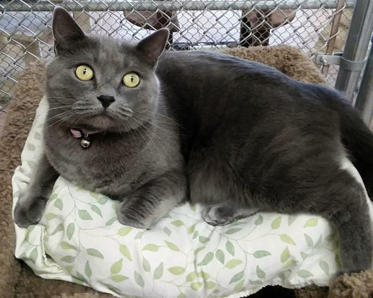 Henna  is available for adoption at 10807 N. 96th Ave. in Peoria. For more information, call 623-773-2246 after 10 a.m.