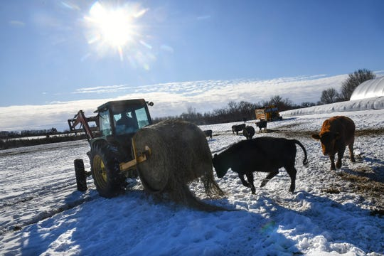Matt Maier rolls out a bale of hay for cows Tuesday, Jan. 7, 2020, at his farm near Clearwater.
