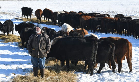 Thousand Hills owner Matt Maier watches as cows eat hay Tuesday, Jan. 7, 2020, at his farm near Clearwater. Maier raises about 300 cattle using regenerative practices designed to benefit the land.