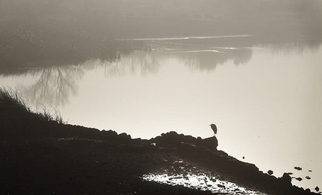 A blue heron perches along a rocky section of Lake Wichita shoreline as the morning sun begins to burn off the fog.