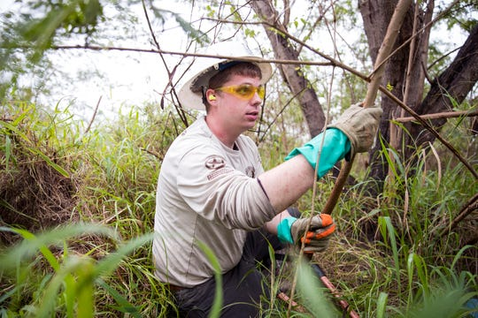 Adam McDonagh, with the American Conservation Experience, cuts down an invasive tree at the Hans and Pat Suter Wildlife Refuge on January 13, 2020. The city is in the process of restoring two of its nature parks with the utilization of a Citgo grant and additional city funds.