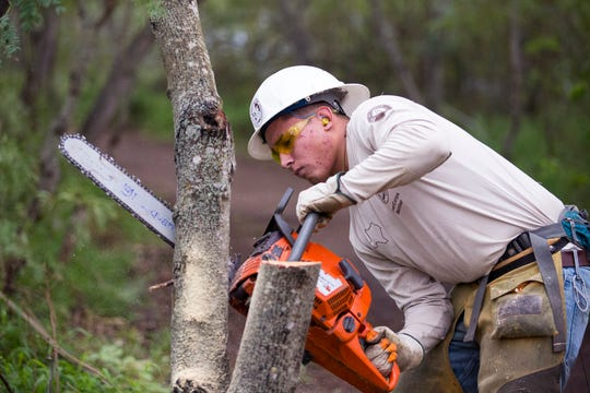 Dalton Oxley, with the American Conservation Experience, prepares an invasive tree to be cut down at the Hans and Pat Suter Wildlife Refuge on January 13, 2020. The city is in the process of restoring two of its nature parks with the utilization of a Citgo grant and additional city funds.