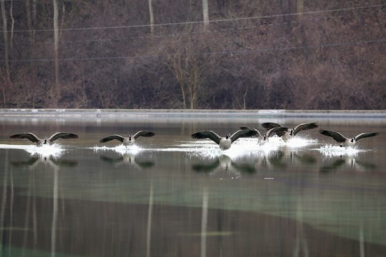Geese land on Mirror Lake, Wednesday, Jan. 15, 2020, at Eden Park in Cincinnati. Cincinnati has experienced 25 consecutive days of above normal temperatures since Dec. 20, according to the National Weather Service.