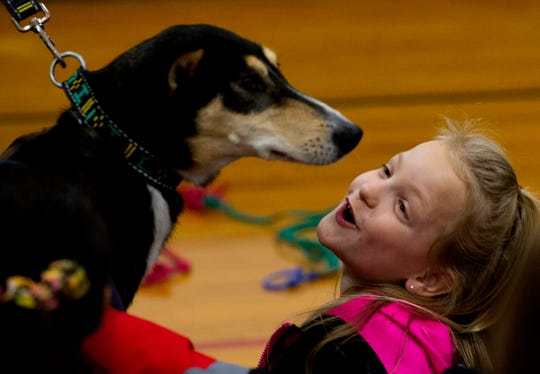Bend Gate Elementary School third-grader Brylee Basham, 8, is greeted by Iditarod sled dog Noggin during a presentation on the Iditarod Trail Sled Dog Race Wednesday afternoon, Jan. 15, 2020.