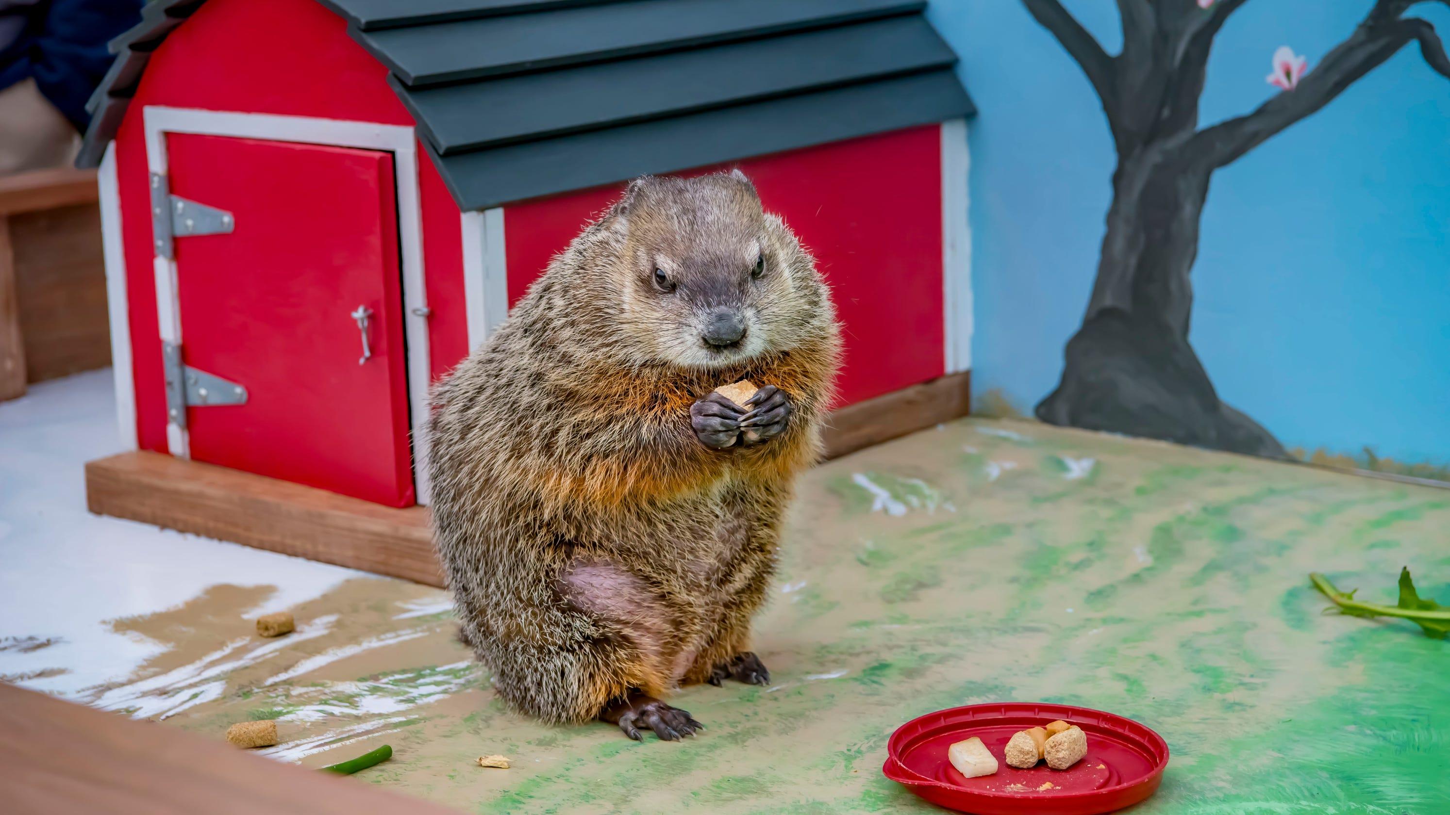 Groundhog day: Milwaukee County Zoo ready to celebrate