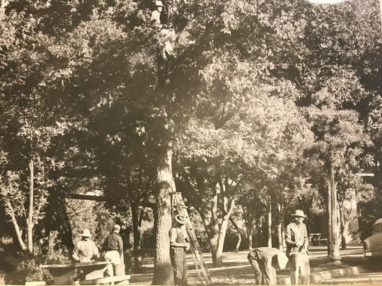 Before several droughts and tighter watering restrictions claimed many of them, pecan trees planted as part of a Kiwanis Club service project provided ample shade in San Angelo's Santa Fe Park.