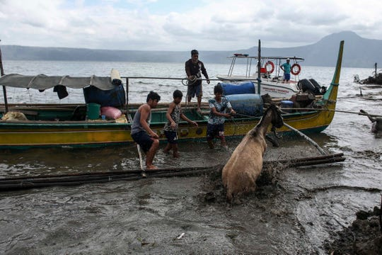 Volunteers save animals that have been left behind as the Taal volcano continues to release ash and smoke in Batangas province, Philippines, on Jan. 14.