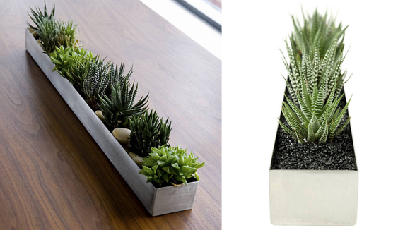 Display your favorite plants in this trough.