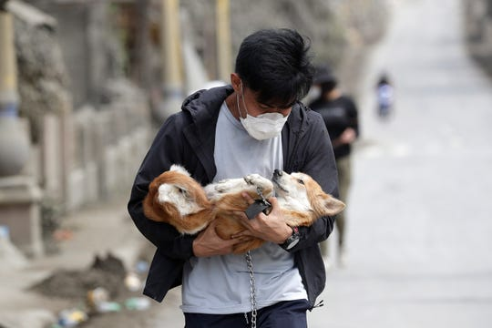 An animal volunteer carries a dog he rescued from deserted homes near Taal volcano as residents evacuated to safer grounds leaving some of their pets behind in Talisay, Batangas province, southern Philippines on Wednesday Jan.15, 2020.