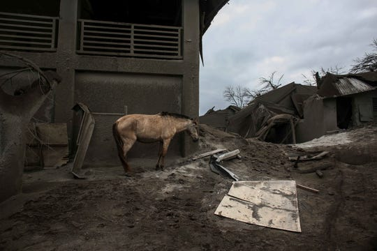 In this Jan. 14 photo, a horse stands next to damaged structure at the Taal volcano island in Talisay, Batangas province, southern Philippines.