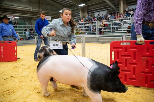 Bailey Brown leads her market swine into the judging area during the Nueces County  Junior Livestock Show at the Richard M. Borchard Regional Fairgrounds on Thursday, Jan. 16, 2020.