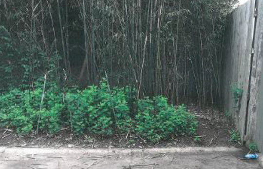 A Pennsylvania man's lawsuit against Six Flags Great Adventure in Jackson, Ocean County, includes a photo of a bamboo grove near the Kingda Ka roller coaster ride.