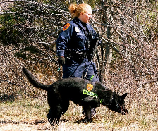 In this March 29, 2011, file photo, a Suffolk County Police Department officer and dog search the Gilgo Beach area on New York's Long Island. Investigators stymied by a nine-year mystery following the discovery of 11 sets of human remains strewn along a suburban New York beach highway revealed a previously unreleased photograph Thursday, Jan. 15, 2020, of evidence found at one of the crime scenes that they say was handled by an unknown suspect.