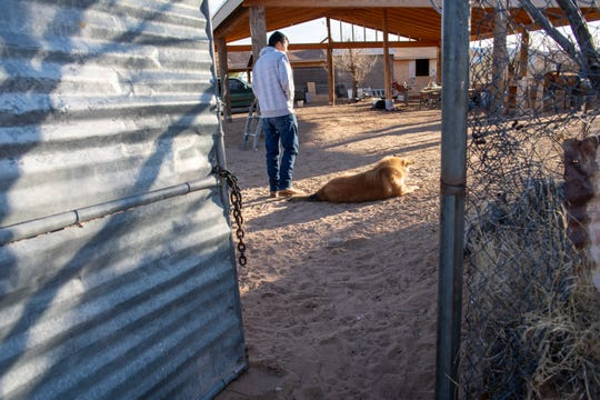 Sofia's son and his dog outside their home in Chaparral. Unlike most residents, Sofia and her husband, Carlos, bought their land from a neighbor instead of a developer.