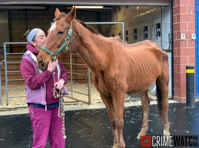 The horses received treatment at New Bolton Center in Kennett Square and are recovering, the DA's office said in a news release Thursday, Jan. 16.