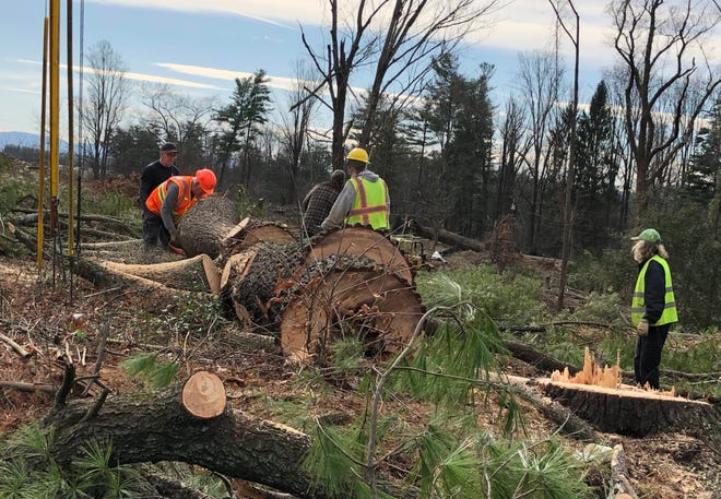 A logging crew was busy on Jan. 16, 2020, clearing large trees off a site slated for commercial development on Long Shoals Road. A crew member said some logs would become lumber, others mulch or firewood.