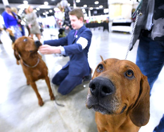 Cody Wright, left, 14, prepares to show 'Tucker,' an 11-month-old male Redbone Coonhound, as his grandfather, Greg Wright, right, holds onto Cody's champion dog, 'Henry,' right, the father of Tucker.