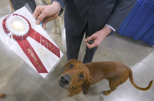 Cody Wright, shows off his Best Opposite Sex and Best Owner Handler awards after showing his five-year-old male Redbone Coonhound named, 'Henry,' who Wright will show at Westminister next month.