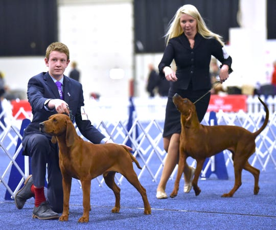 Cody Wright, left, 14, shows his champion Redbone Coonhound named, 'Henry,' against Kristin Lawless, of Louisville, KY, who shows 'Brandi,' a five-year-old female Redbone Coonhound.