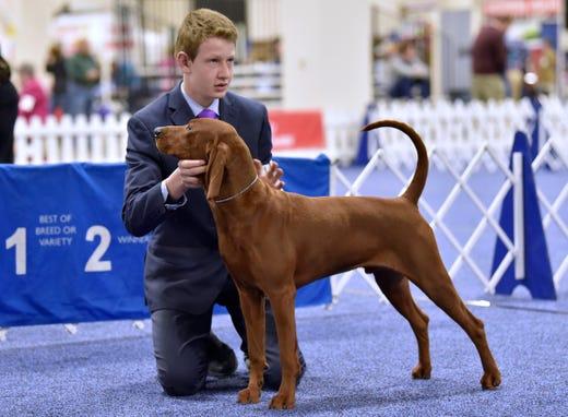 Teen Dog Handler Warms Up For Westminster At Novi Show