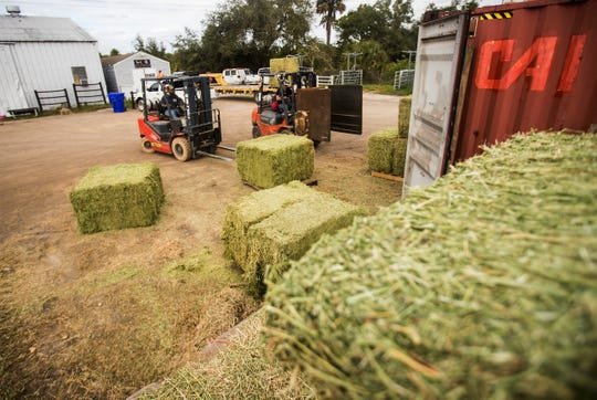 Workers for Sweet Cypress Ranch on State Road 80 east of I-75 move hay bales that will go to customers on Friday Jan 17, 2020. Most of the customers that get supplies from Sweet Cypress Ranch are within the boundaries of a proposed toll road that may go north to south through the area.