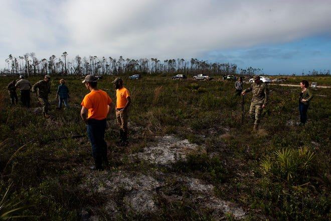 Airmen, their spouses, and civilian partners plant Longleaf pine trees at Tyndall Air Force Base, Fla, Jan. 15, 2020. The 325th Civil Engineer Squadron natural resources section and contracted partners will begin planting Longleaf pine trees along U.S. Highway 98 near Fire Station 4 at Silver Flag Road.