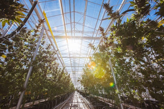 Copperstate Farms in Snowflake, Ariz., is one of the largest marijuana grow operations in the country.