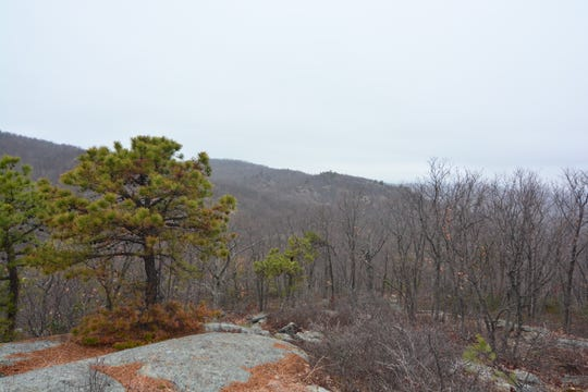 This is the second in a collection of views along the Wyanokie High Point Loop.