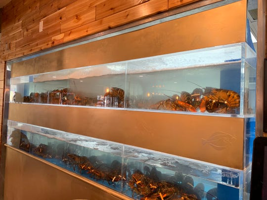 Live lobsters in tanks are on view at Jin's Sushi Seafood & Bar.