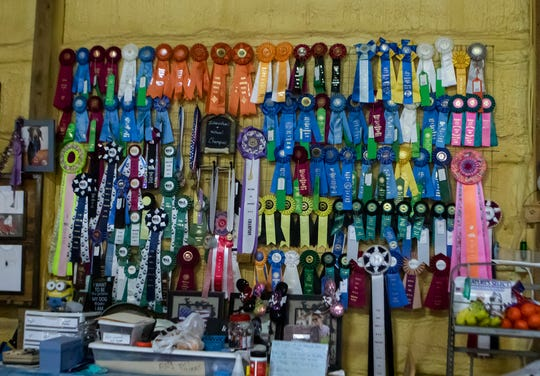 Ribbons are on display at CT Dog Services in Downsville, La. on Jan. 16. during the barn hunt event.