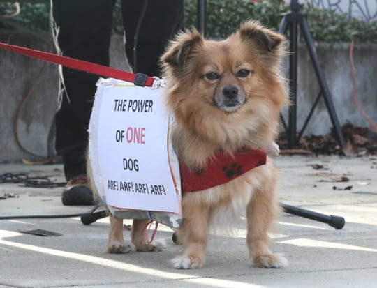 Gryffin the Protest Dog displayed a sign in keeping with the main theme of the 2020 Redding Women's March: The power of one.