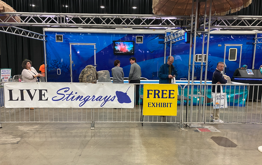 Live Stingray exhibit at the Detroit Boat Show on Jan. 18