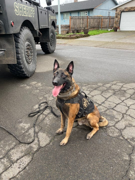 Zeke, a K-9 with the Marion County Sheriff's Office.