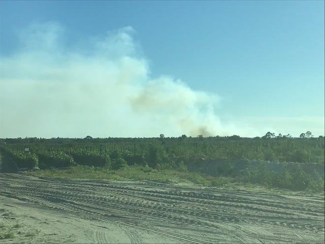 A prescribed burn on property for panther mitigation near Corkscrew in southern Lee County produced billowing white and brown smoke Monday afternoon.