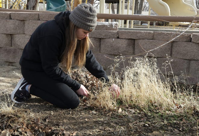Brynlee Hancock, 13, pulls weeds while volunteering, Monday, Jan. 20, 2020, during the Martin Luther King Jr. Day of Service at Childhaven in Farmington.