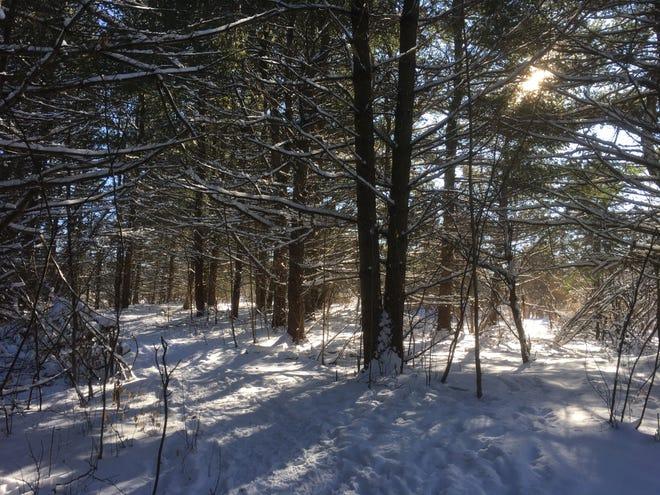 A snowy, sunny walk through Wheeler Nature Park in South Burlington on Jan. 20, 2020.