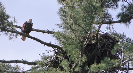 New bald eagle nests were reported by citizens in 2019.