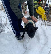North Shore firefighters rescued this dog from the Milwaukee River in Glendale on Saturday, Jan. 18.